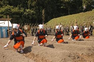 Празднование Дня труда в Японии